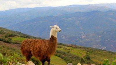 PERU, dio 5